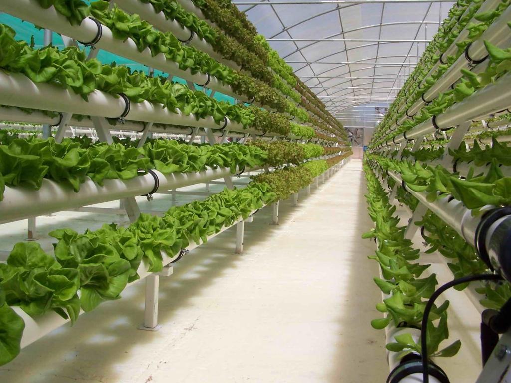 Гидропоника, как метод выращивания растений.jpg