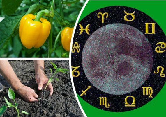 Лунные календари для дачников. Польза или вред?
