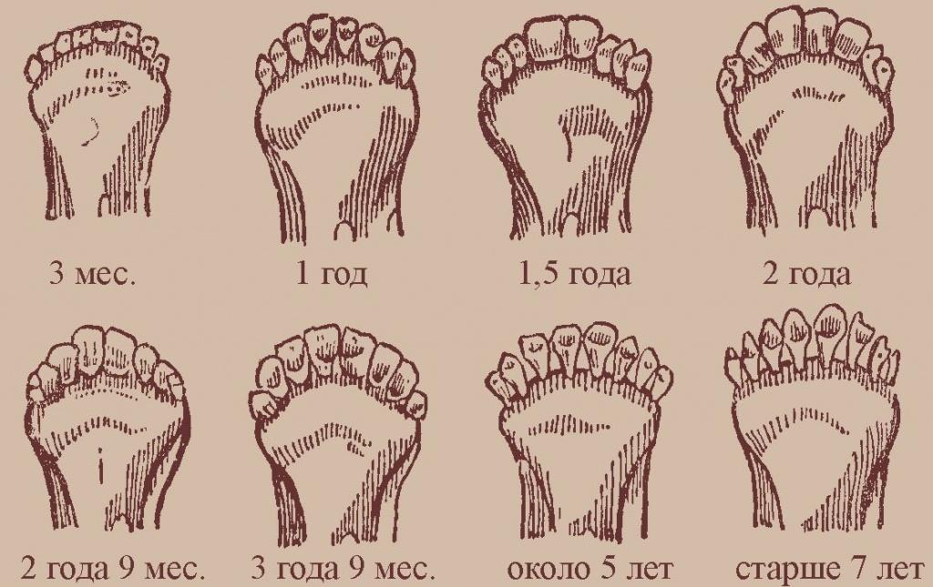 Зубы коз и овец