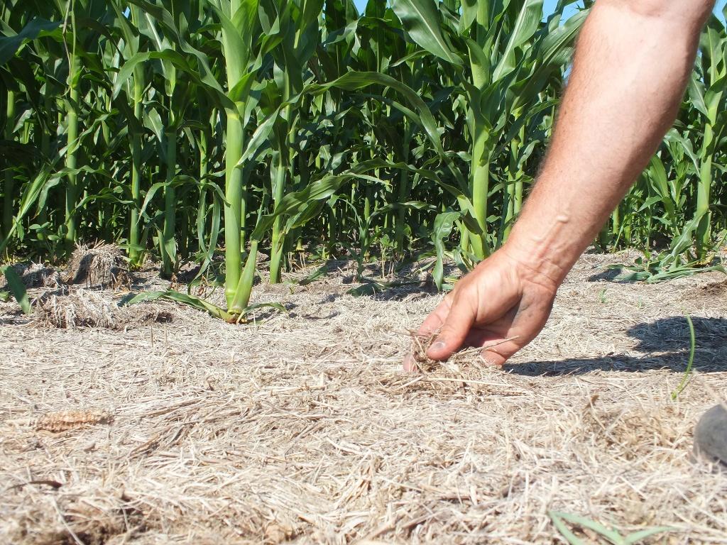 Система нулевой обработки почвы.jpg