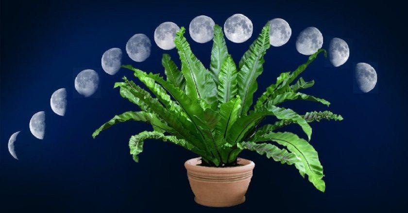 Влияние лунных циклов на растения