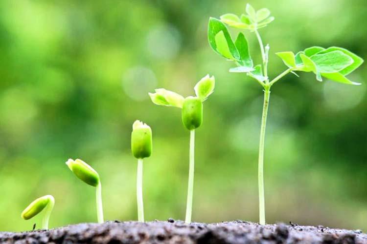 Стимуляторы роста растений.jpg