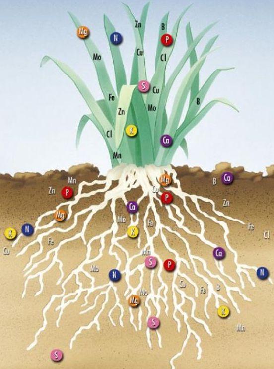 Минеральное питание растений, обзор.