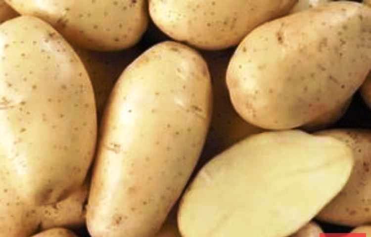 Картофель 'Конкорд'.jpg