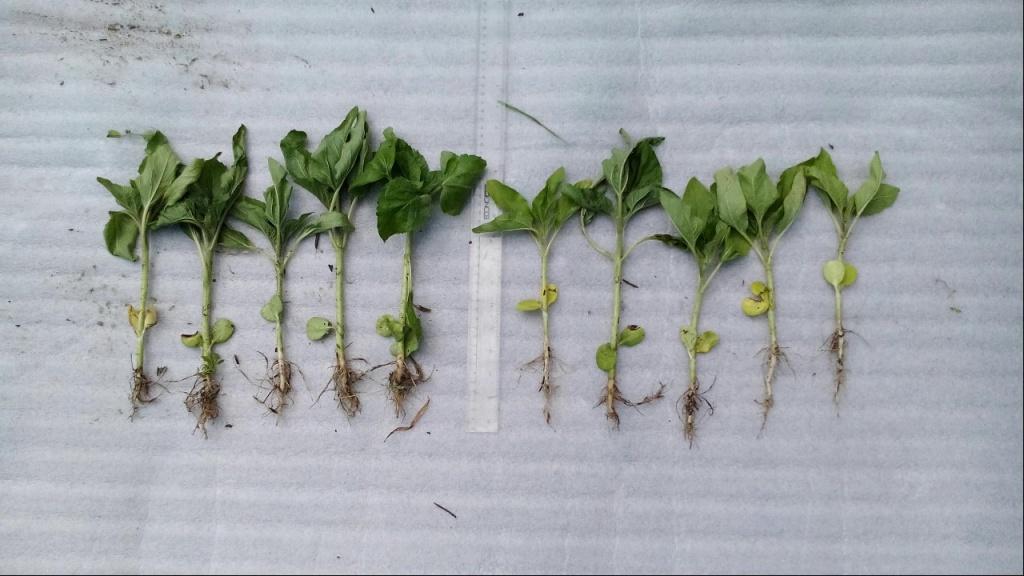 Препараты стимулирующие рост растений.jpg