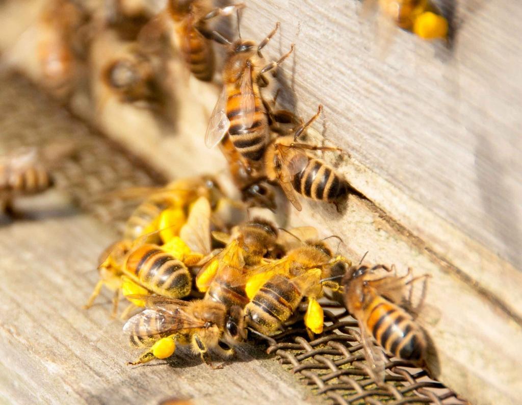 Жизнь пчелы картинки