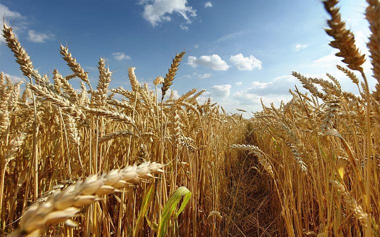 Как вырастить богатый урожай.jpg
