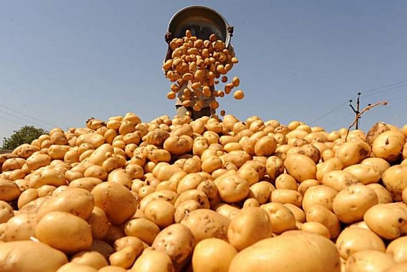 Разновидности картофеля по спелости.jpg