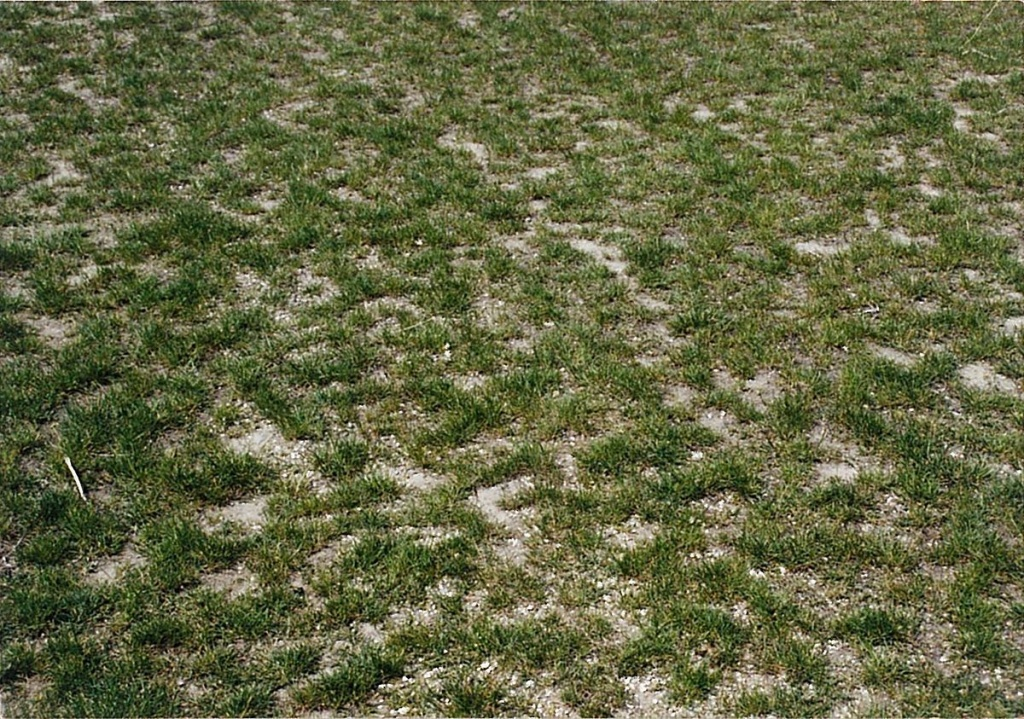 Солонцы. Способы улучшения почвы.jpg