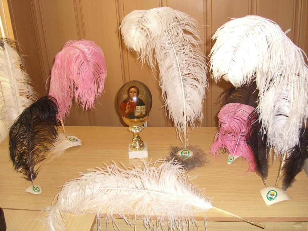 Страусиные перья уход за ними