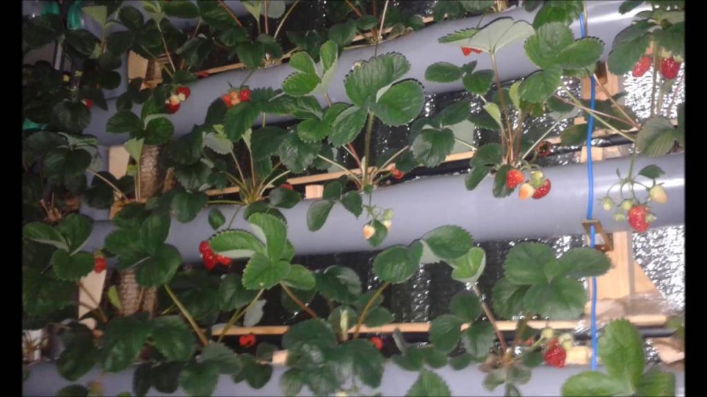 Безгрунтовой способ выращивания растений. Гидропоника.jpg