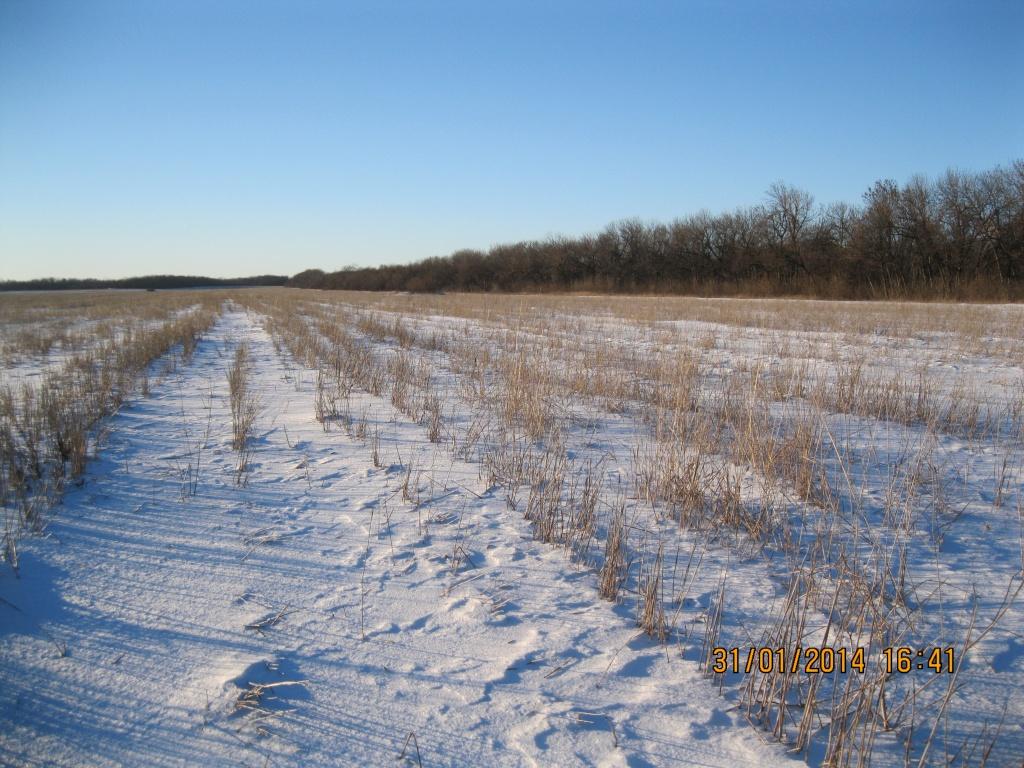Как задержать снежный покров на полях.jpg