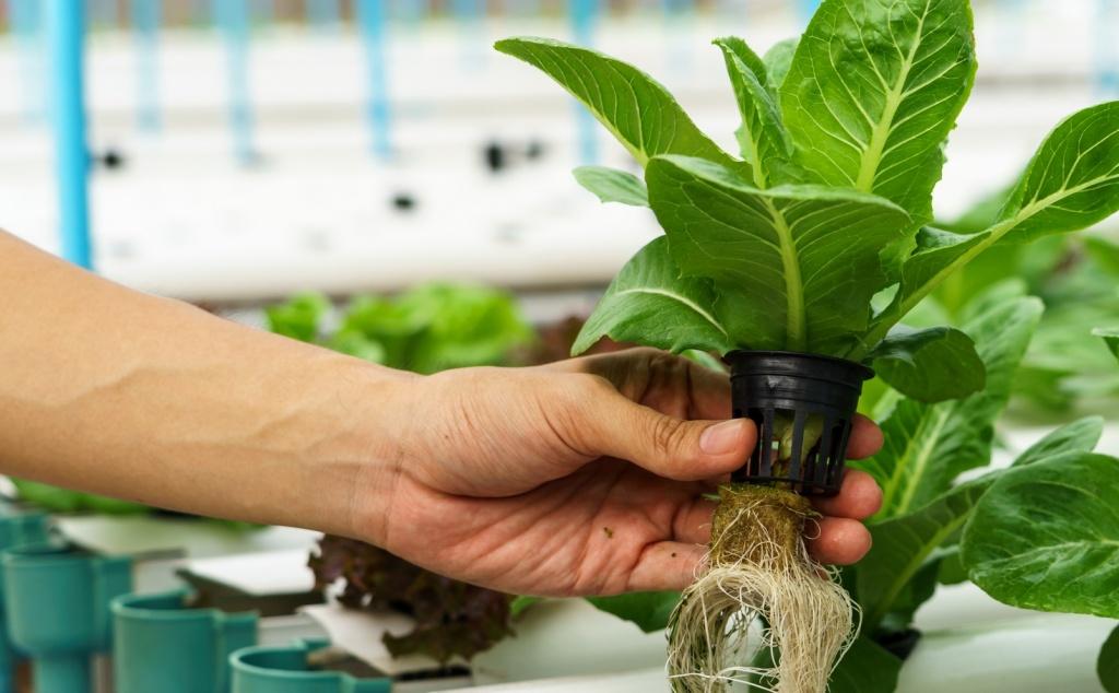 Безгрунтовой метод выращивания растений. Гидропоника.jpg