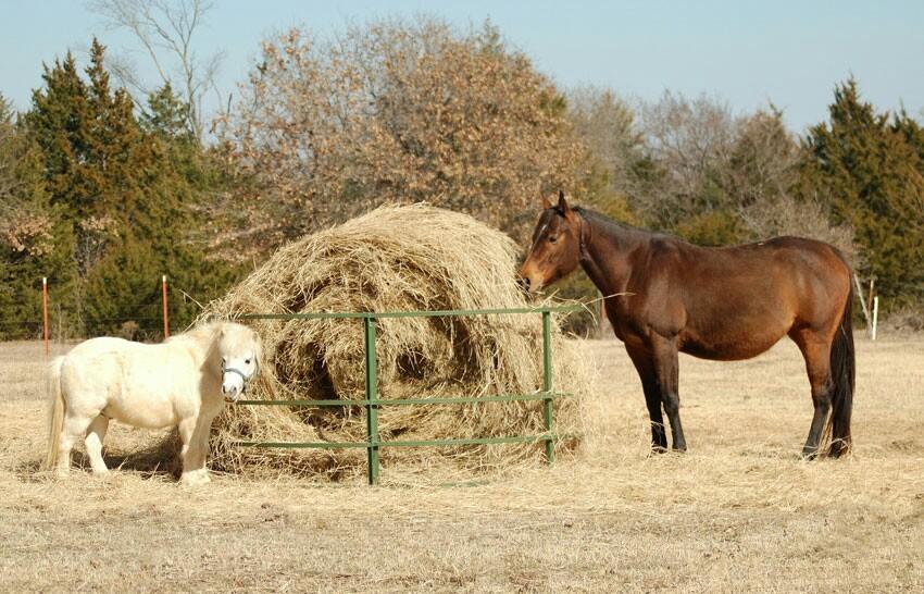 Картинки кормления лошадей