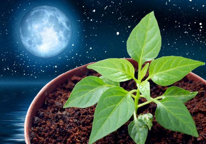 Стоит ли доверять лунным календарям
