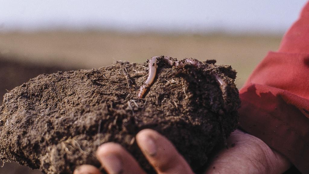 Органика для улучшения свойств почвы.jpg