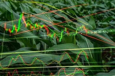 double-exposure-corn-crop-field-260nw-1293379975.jpg
