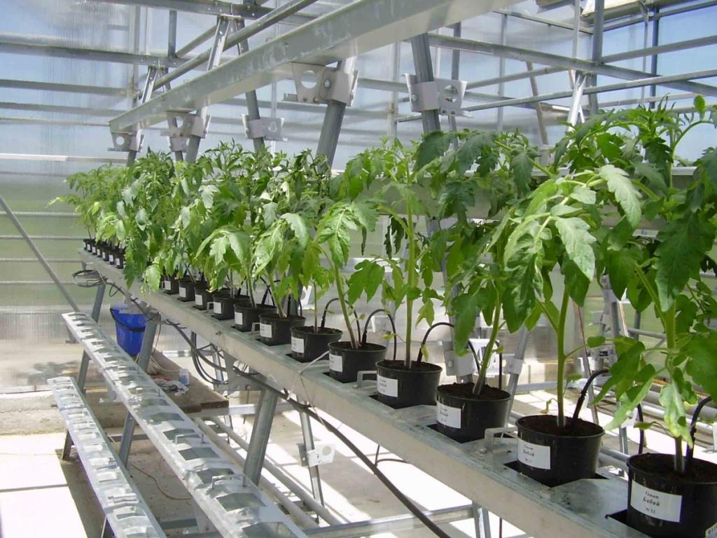 Гидропоника, как эффективный метод выращивания растений.jpg