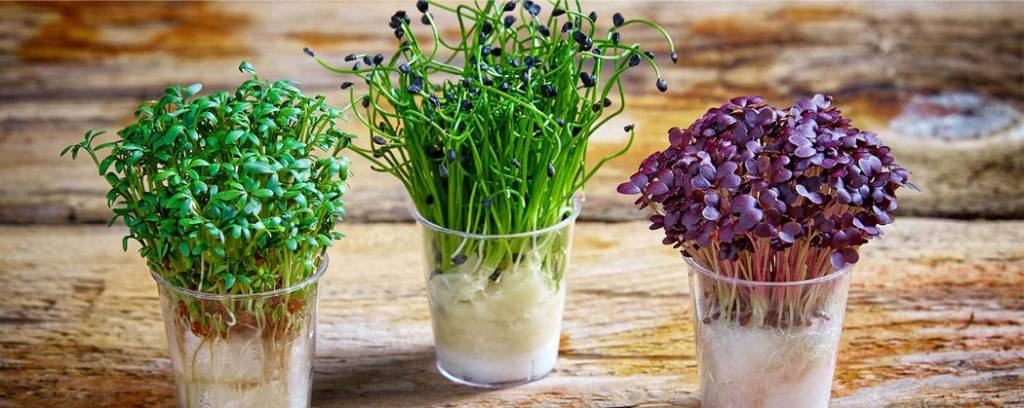 Выращиваем витамины в домашних условиях