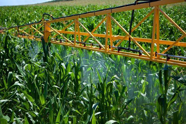 Как повысить эффективность воздействия стимуляторов роста растений.jpg