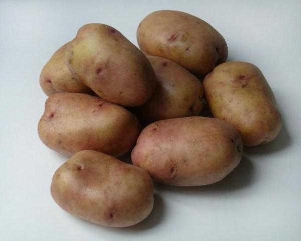Сорт картофеля Зарница.jpg