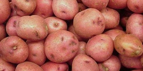 Сорт картофеля Зарево.jpg