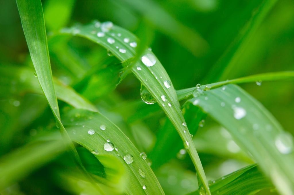 Применение адъюванта при обработке поля пестицидами.jpg