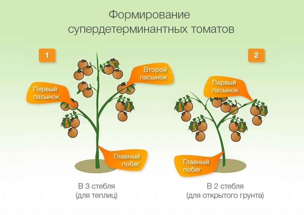 Пасынкование. Формирование куста томатов.jpg