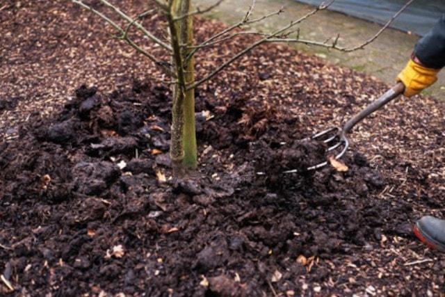 Можно ли сажать плодовые деревья в огороде 69
