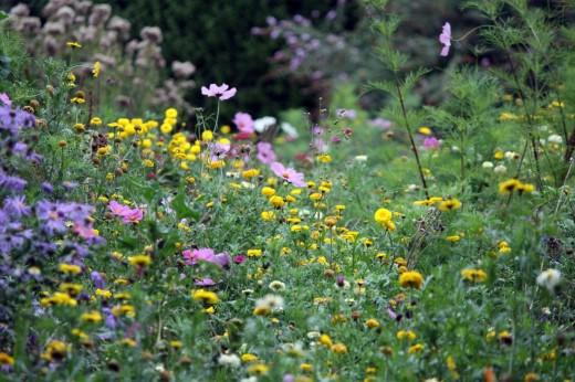 Медоносные цветы.jpg
