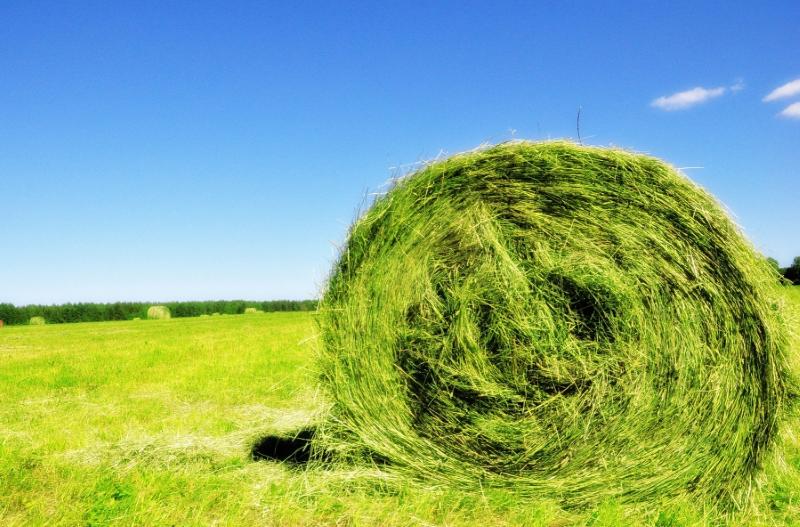 Зеленый корм из суданской травы