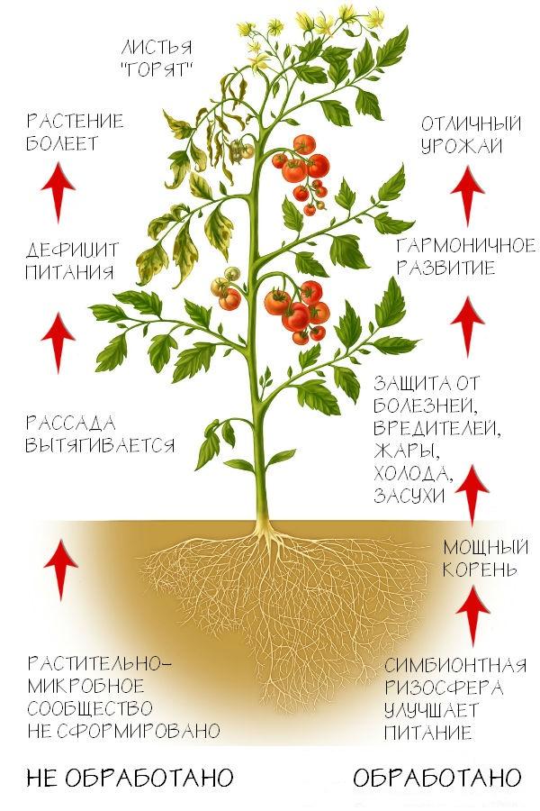 Регуляторы роста растений.jpg