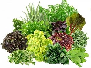 крест салат фото на грядке полезные свойства