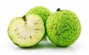 Маклюра или адамово яблоко.Полезные свойства плодов. Лечение с помощью  мазей и настоев из адамового яблока