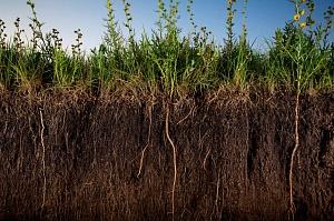 гумус в почве