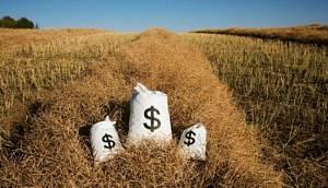Выгодный бизнес в сельском хозяйстве россии